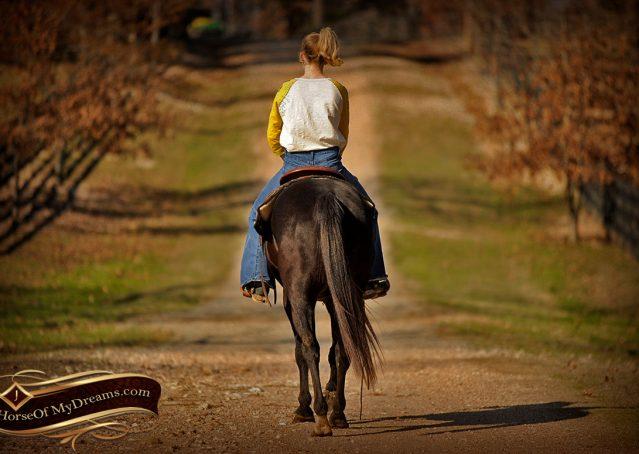 017-Coal-Black-Quarter-horse-gelding-for-sale