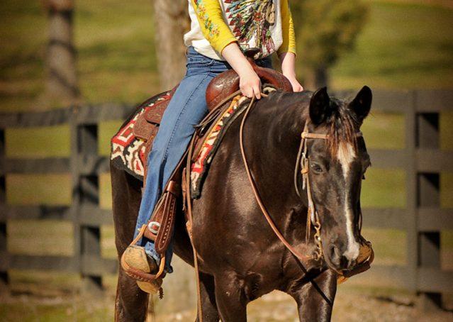018-Coal-Black-Quarter-horse-gelding-for-sale