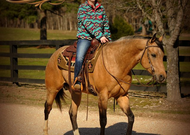 018-Native-Buckskin-AQHA-Gelding-For-Sale