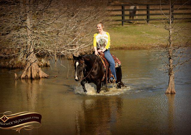 020-Coal-Black-Quarter-horse-gelding-for-sale