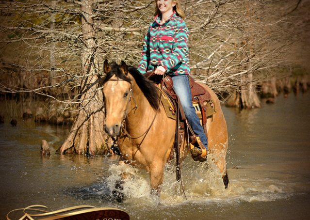 020-Native-Buckskin-AQHA-Gelding-For-Sale