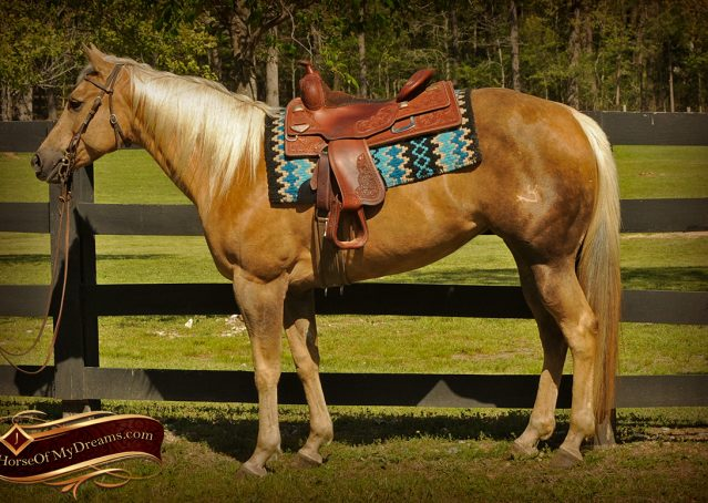 001-Angel-Palomino-Quarter-Horse-Mare-For-Sale