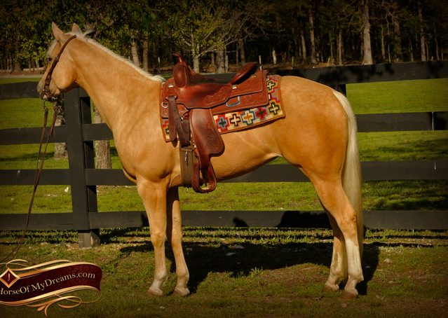 001-Chanel-Palomino-AQHA-Reining-mare-for-sale