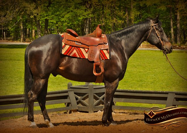 001-Chip-Bay-AQHA-Gelding-For-Sale