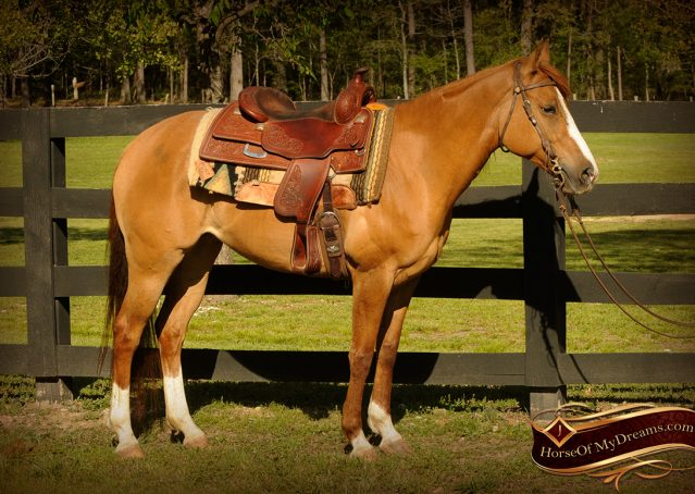 001-DeeDee-Red-Dun-APHA-Mare-For-Sale