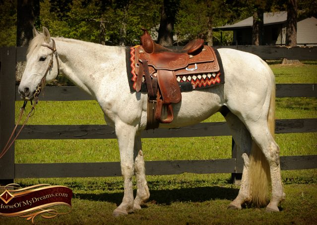 001-Silver-Gray-AQHA-Gelding-For-Sale