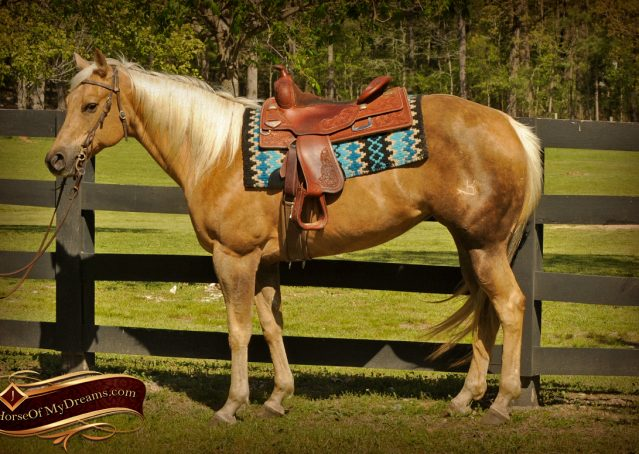 002-Angel-Palomino-Quarter-Horse-Mare-For-Sale