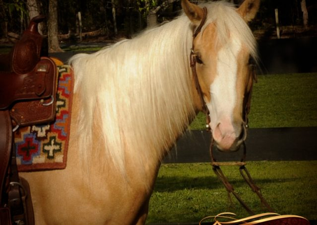 002-Chanel-Palomino-AQHA-Reining-mare-for-sale