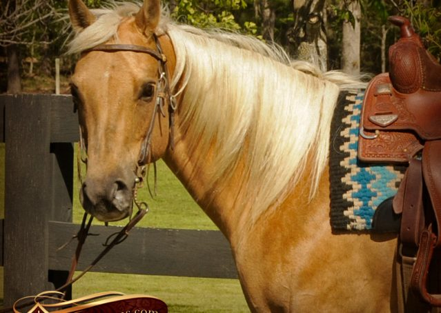 003-Angel-Palomino-Quarter-Horse-Mare-For-Sale