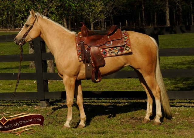003-Chanel-Palomino-AQHA-Reining-mare-for-sale