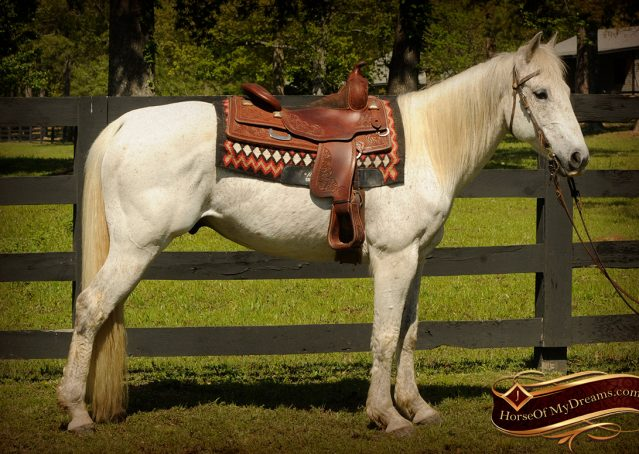 003-Silver-Gray-AQHA-Gelding-For-Sale