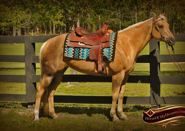 004-Angel-Palomino-Quarter-Horse-Mare-For-Sale