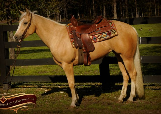 004-Chanel-Palomino-AQHA-Reining-mare-for-sale