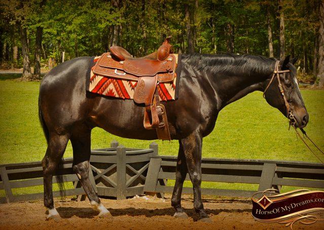 004-Chip-Bay-AQHA-Gelding-For-Sale