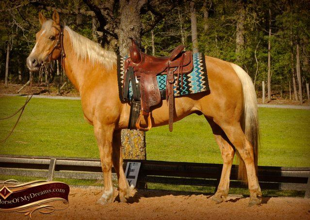 004-Regent-Palomino-Quarter-Horse-Gelding-For-Sale