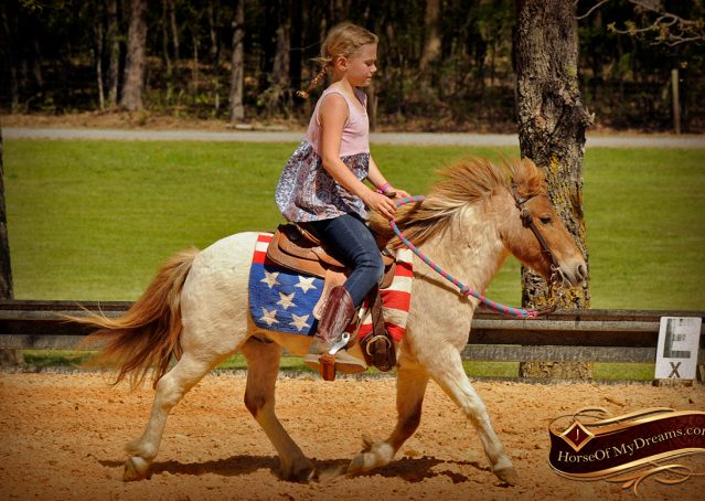 004-Spice-Red-Roan-Pony-For-Sale