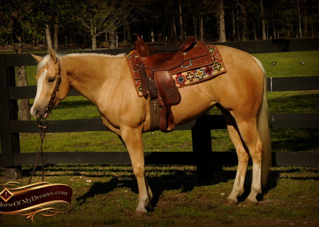 005-Chanel-Palomino-AQHA-Reining-mare-for-sale