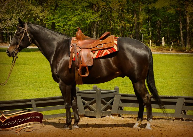 005-Chip-Bay-AQHA-Gelding-For-Sale
