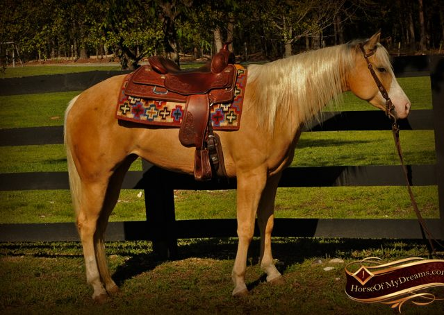 006-Chanel-Palomino-AQHA-Reining-mare-for-sale
