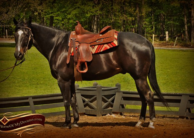006-Chip-Bay-AQHA-Gelding-For-Sale