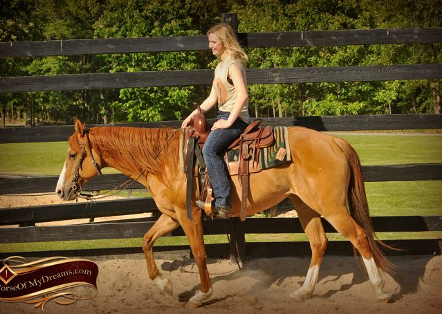 006-DeeDee-Red-Dun-APHA-Mare-For-Sale