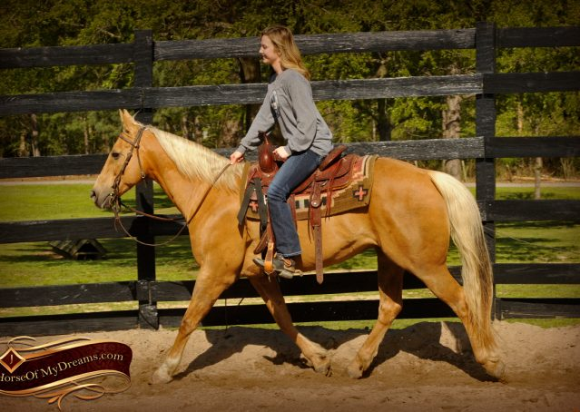 006-Regent-Palomino-Quarter-Horse-Gelding-For-Sale
