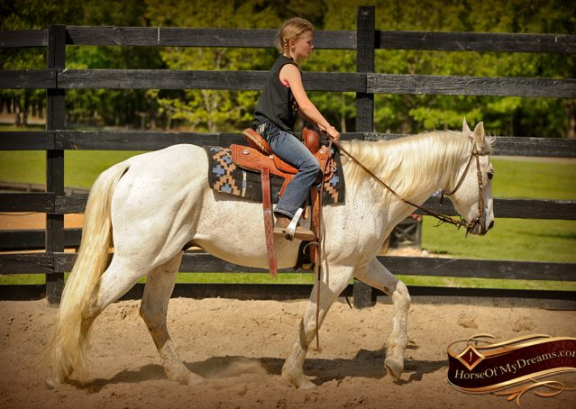 006-Silver-Gray-AQHA-Gelding-For-Sale
