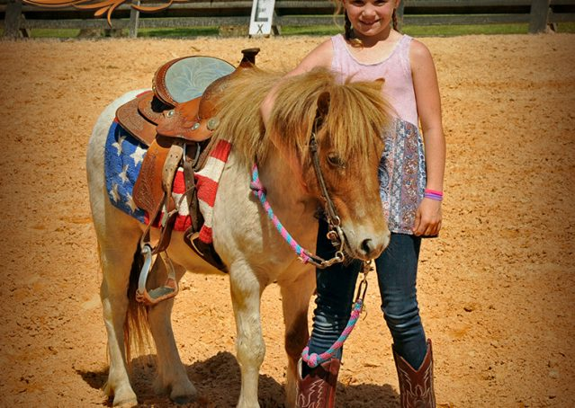 006-Spice-Red-Roan-Pony-For-Sale