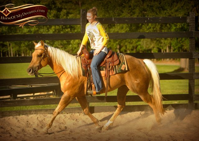 007-Angel-Palomino-Quarter-Horse-Mare-For-Sale