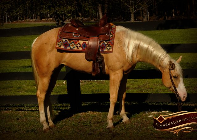 007-Chanel-Palomino-AQHA-Reining-mare-for-sale