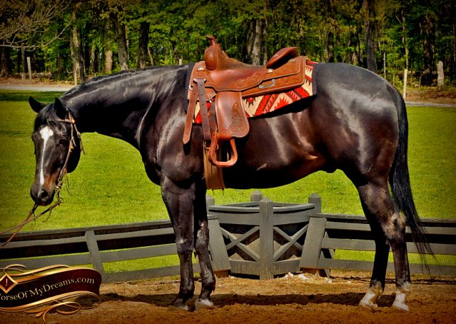 007-Chip-Bay-AQHA-Gelding-For-Sale