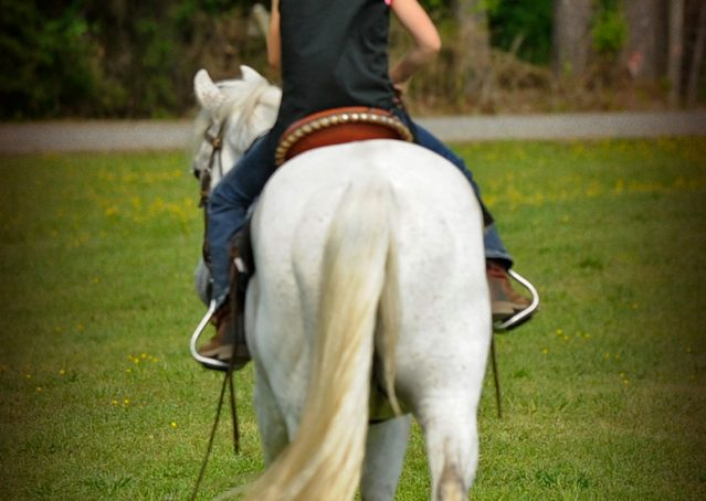 007-Silver-Gray-AQHA-Gelding-For-Sale