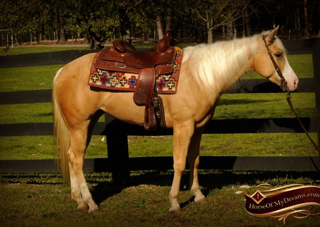 008-Chanel-Palomino-AQHA-Reining-mare-for-sale