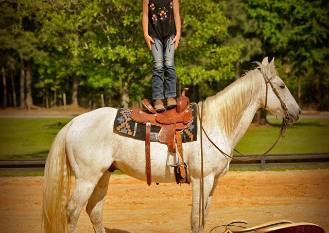 008-Silver-Gray-AQHA-Gelding-For-Sale