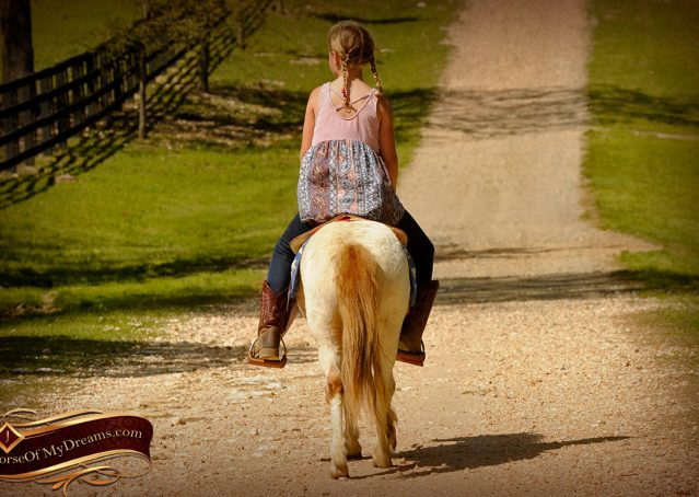 008-Spice-Red-Roan-Pony-For-Sale