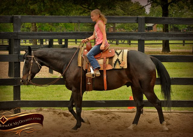 009-Chip-Bay-AQHA-Gelding-For-Sale