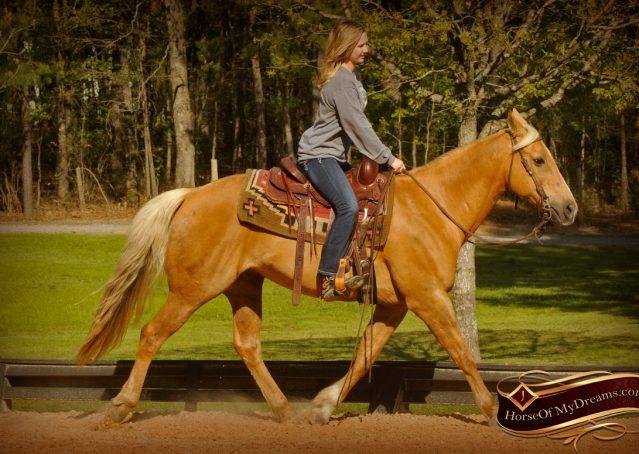 009-Regent-Palomino-Quarter-Horse-Gelding-For-Sale
