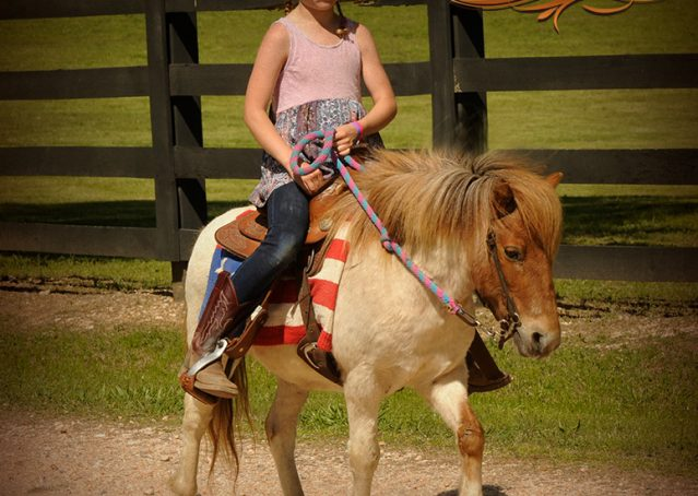 009-Spice-Red-Roan-Pony-For-Sale