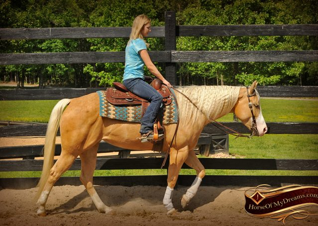 010-Chanel-Palomino-AQHA-Reining-mare-for-sale