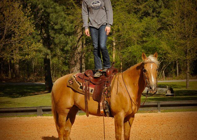 010-Regent-Palomino-Quarter-Horse-Gelding-For-Sale