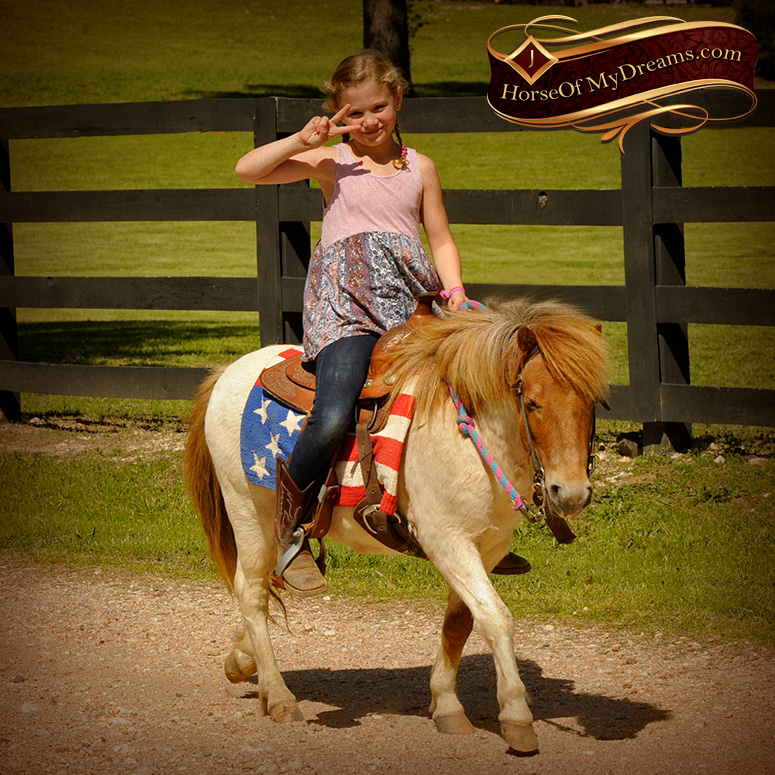 Ponies for Sale | Horse of My Dreams