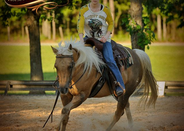 011-Angel-Palomino-Quarter-Horse-Mare-For-Sale