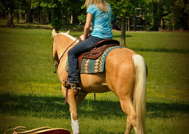 011-Chanel-Palomino-AQHA-Reining-mare-for-sale