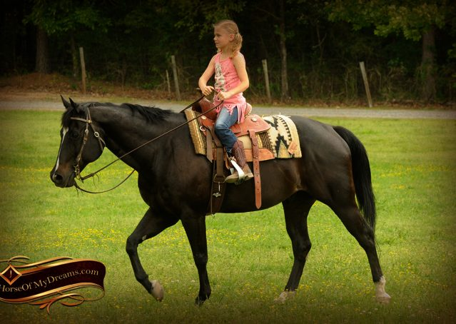 011-Chip-Bay-AQHA-Gelding-For-Sale
