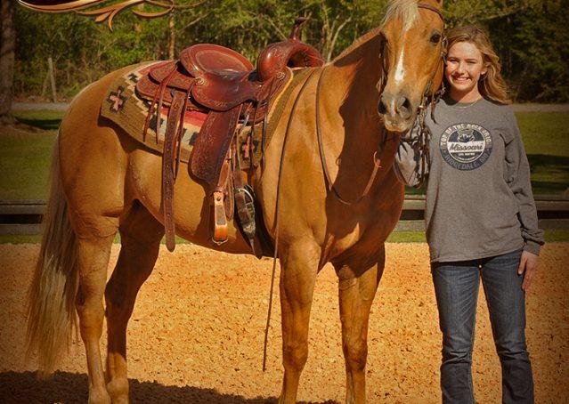 011-Regent-Palomino-Quarter-Horse-Gelding-For-Sale