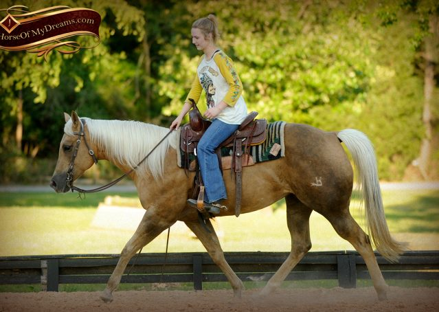 012-Angel-Palomino-Quarter-Horse-Mare-For-Sale