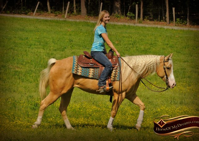 012-Chanel-Palomino-AQHA-Reining-mare-for-sale