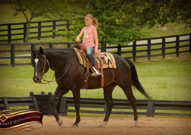 012-Chip-Bay-AQHA-Gelding-For-Sale