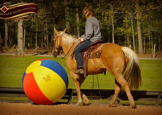 012-Regent-Palomino-Quarter-Horse-Gelding-For-Sale