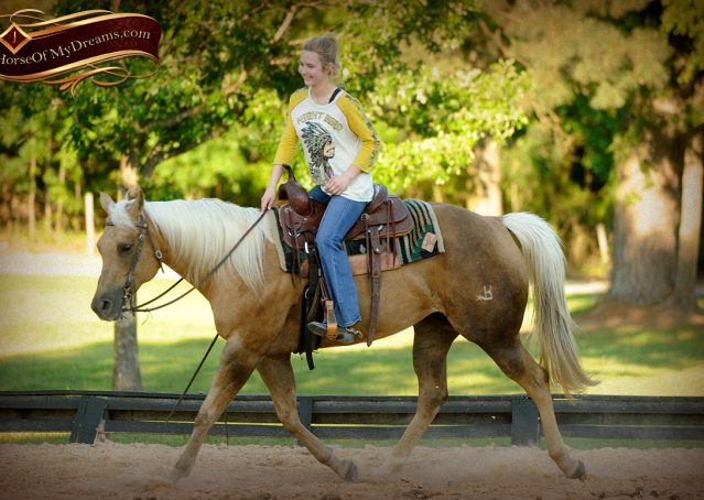 013-Angel-Palomino-Quarter-Horse-Mare-For-Sale